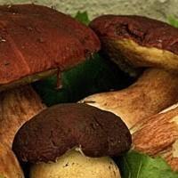 Rotolini ai funghi porcini