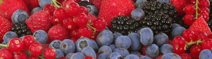 Arabesco con frutti di bosco