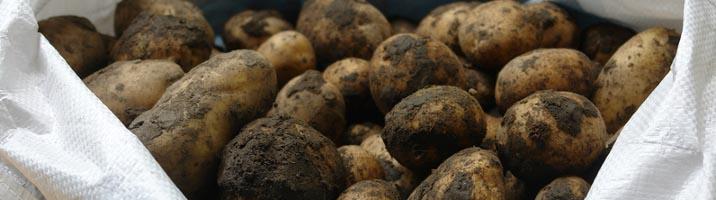 Tortino di patate e prosciutto