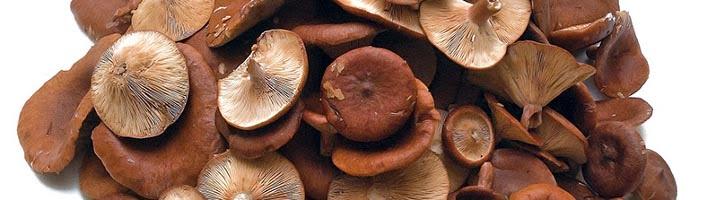 Arrosto di fesa di vitello ai funghi