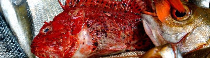 Brodetto di pesci di scoglio